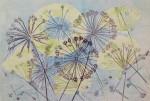 Allium Umbels I