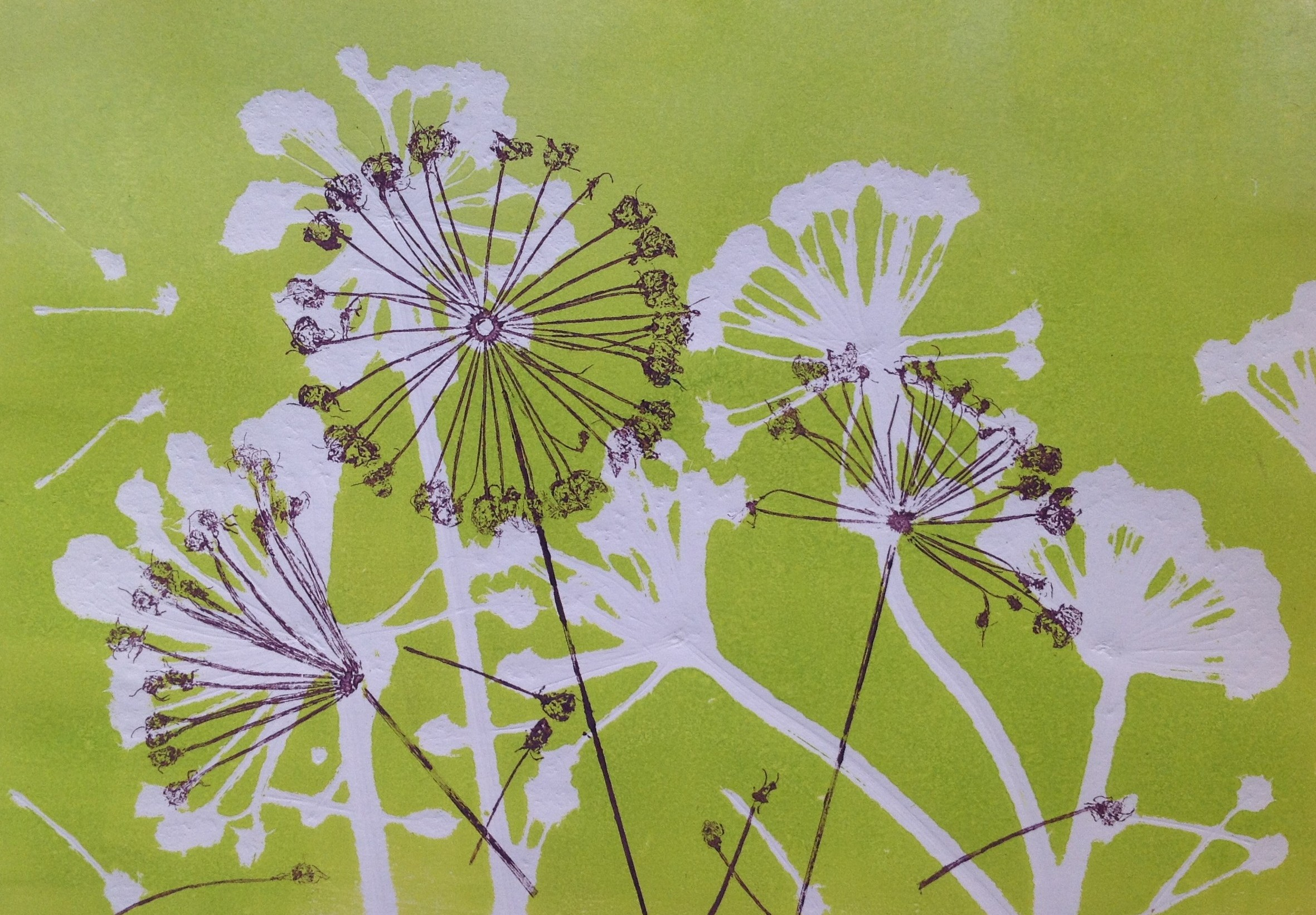 Allium Umbels III