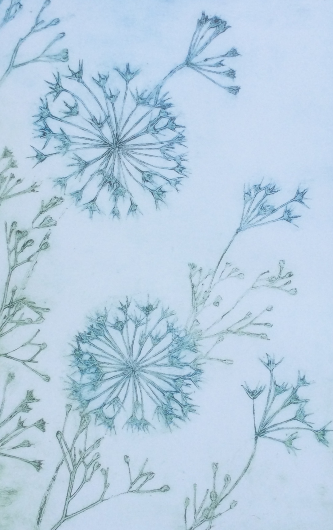 Stellate Allium-Collagraph